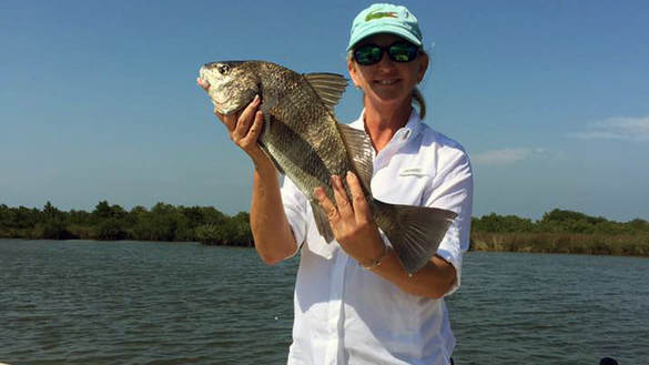 angler with a black drum in the homosassa fishery